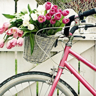 Vintage Bicycle ♥